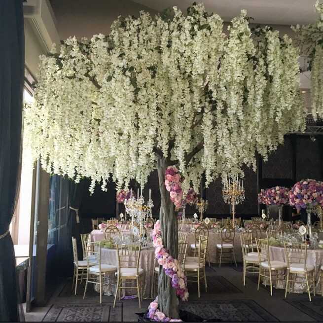 4.5m-White-Wisteria-Tree