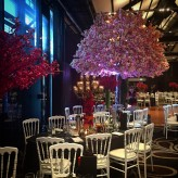 5m Pink Cherry Blossom Trees